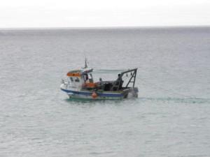 Fiskarna håller sig varma efter fiskarna.